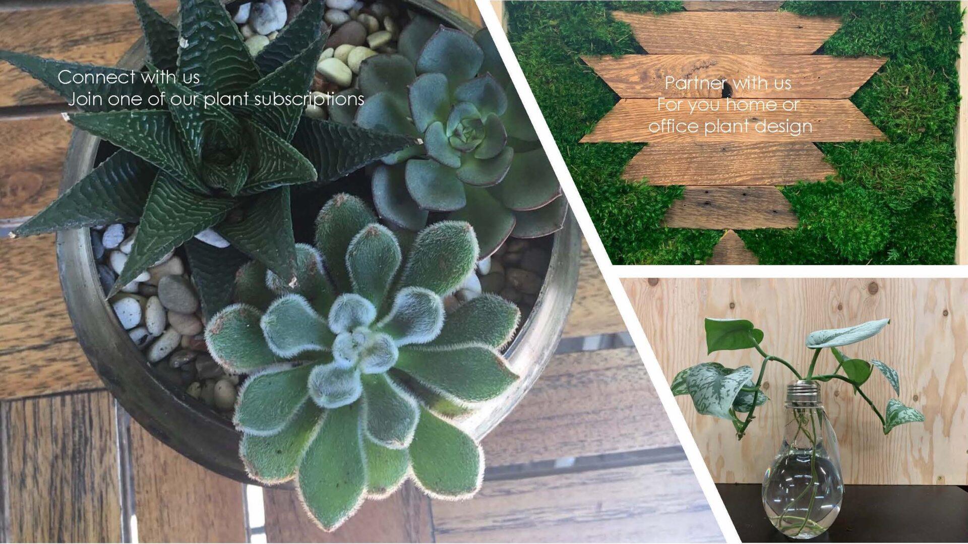 shop our plants
